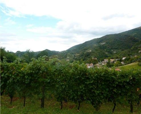 Vineyards of Contra Soarda