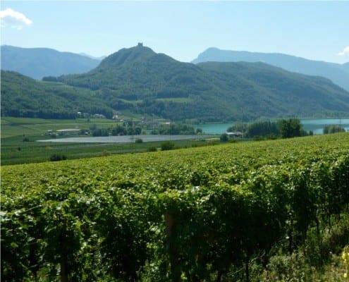 Vineyards near Caldero