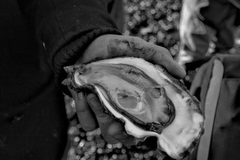 Limfjord Oyster