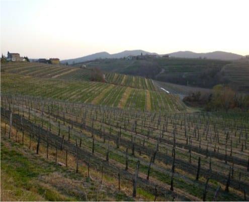 Kaber vineyards