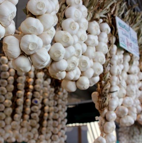 Marche_garlic