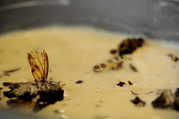 Chocolate Covered Cicada Ice Cream