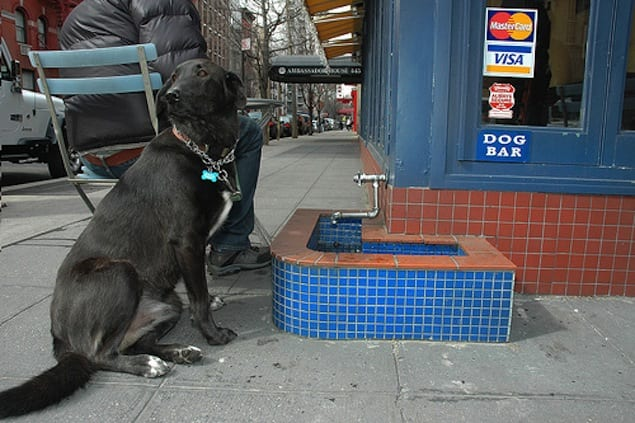 NYC: Dog Friendly Places to Eat & Drink