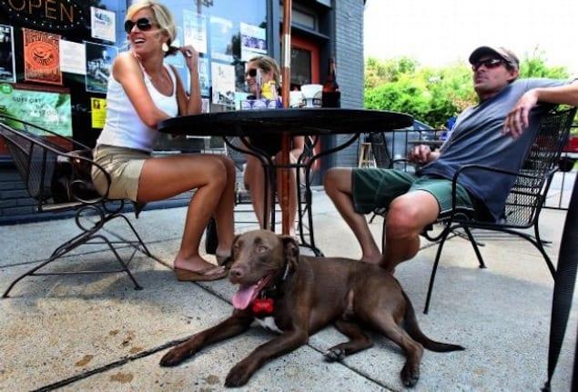 dog on patio photo