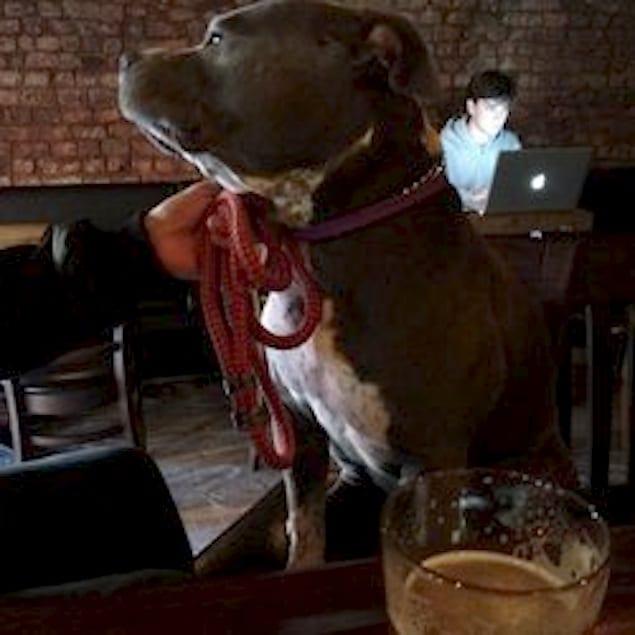 Barking Dog Cafe Nyc