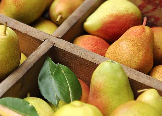 Pear_Cider_2