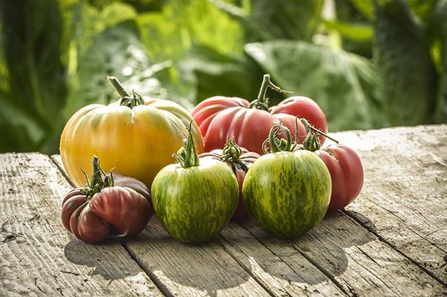 TomatoesGolderGermanPurpleCalabashGreenZebra copy