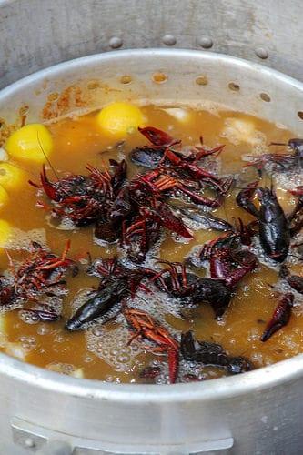 4-crawfish-in