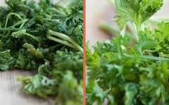 How To Revive Those Wilted Herbs
