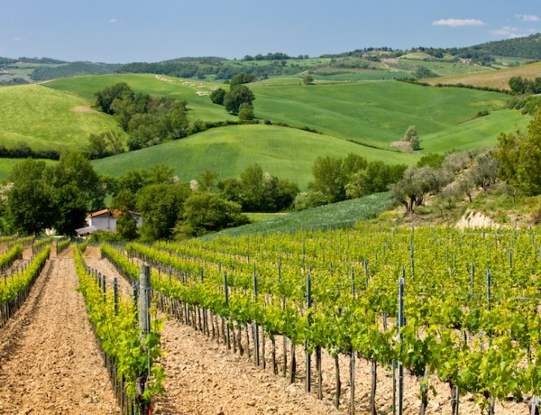 Exploring Montepulciano's Vino Nobile