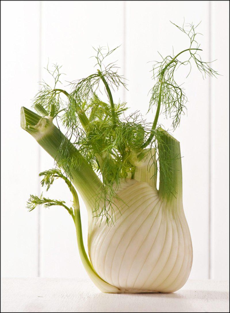 fresh+fennel+bulb