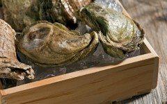 fresh+oysters
