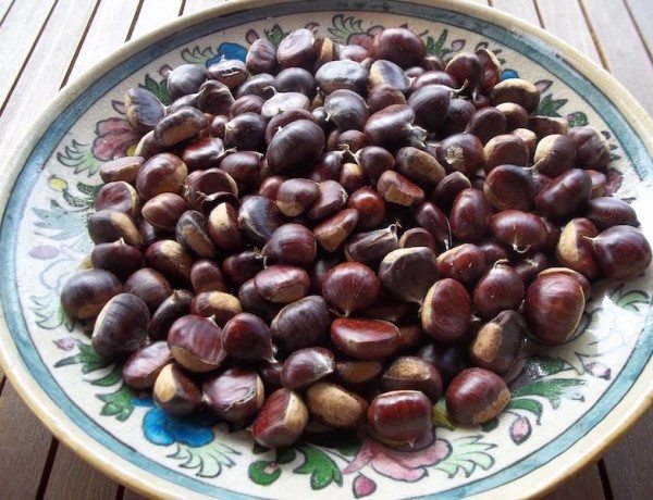 CHESTNUT FROM ETNA