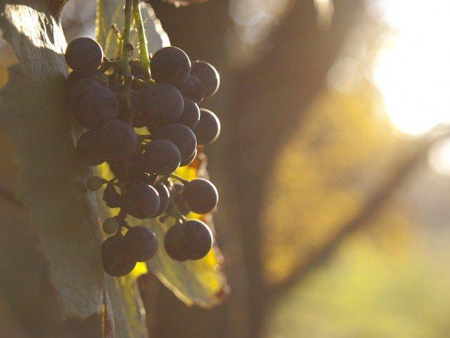 The Evolution of Alsatian Red Wine