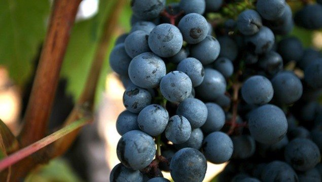 Conscious Drinking: Top Green Wines