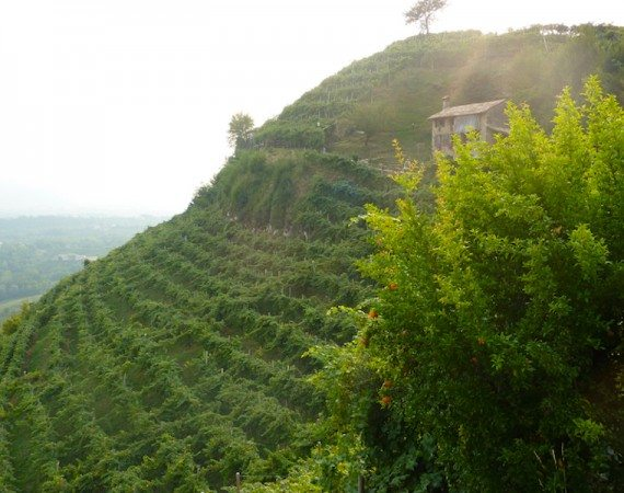 cartizze-vineyards-prosecco-bike-tours-italy