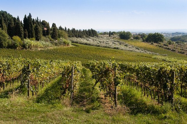 Top Twelve Undiscovered Wines of Northeastern Italy