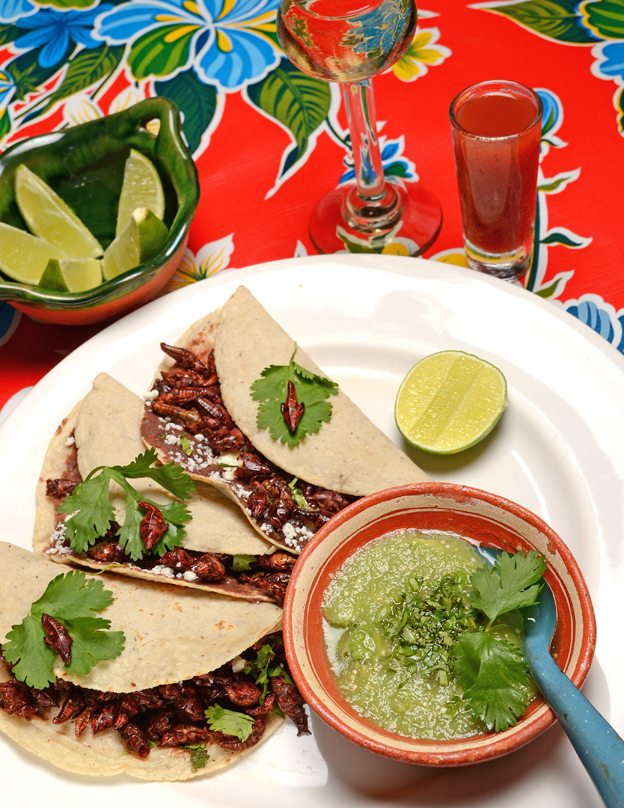 El Arrayan roasted cricket tacos