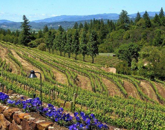 Pezzi King Vineyard 2 Credit Sonoma County Tourism