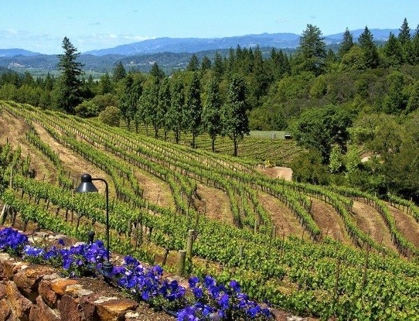 Pezzi King Vineyard 2 Credit Sonoma County Tourism
