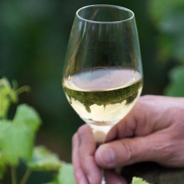 Mick Schroeter, Sonoma-Cutrer Winemaking Director observing Grand Cru vineyards