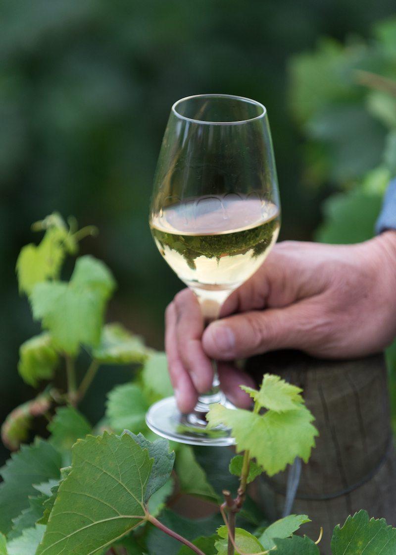 Focus on Chardonnay in Meursault, France