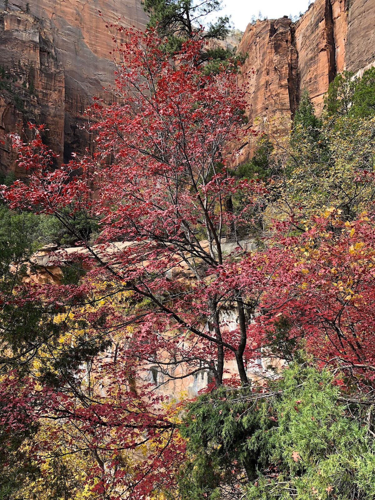 ZIon's coat of many colors