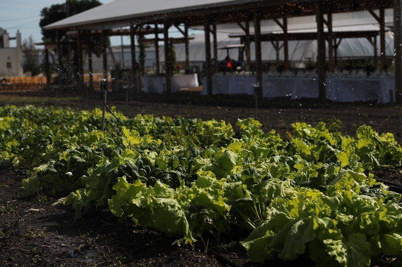 city roots farm