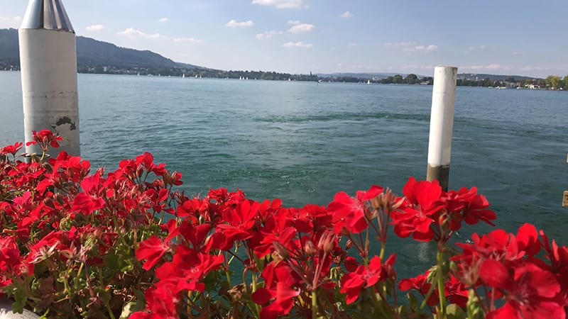 Lake Views in the Old Town, Zurich